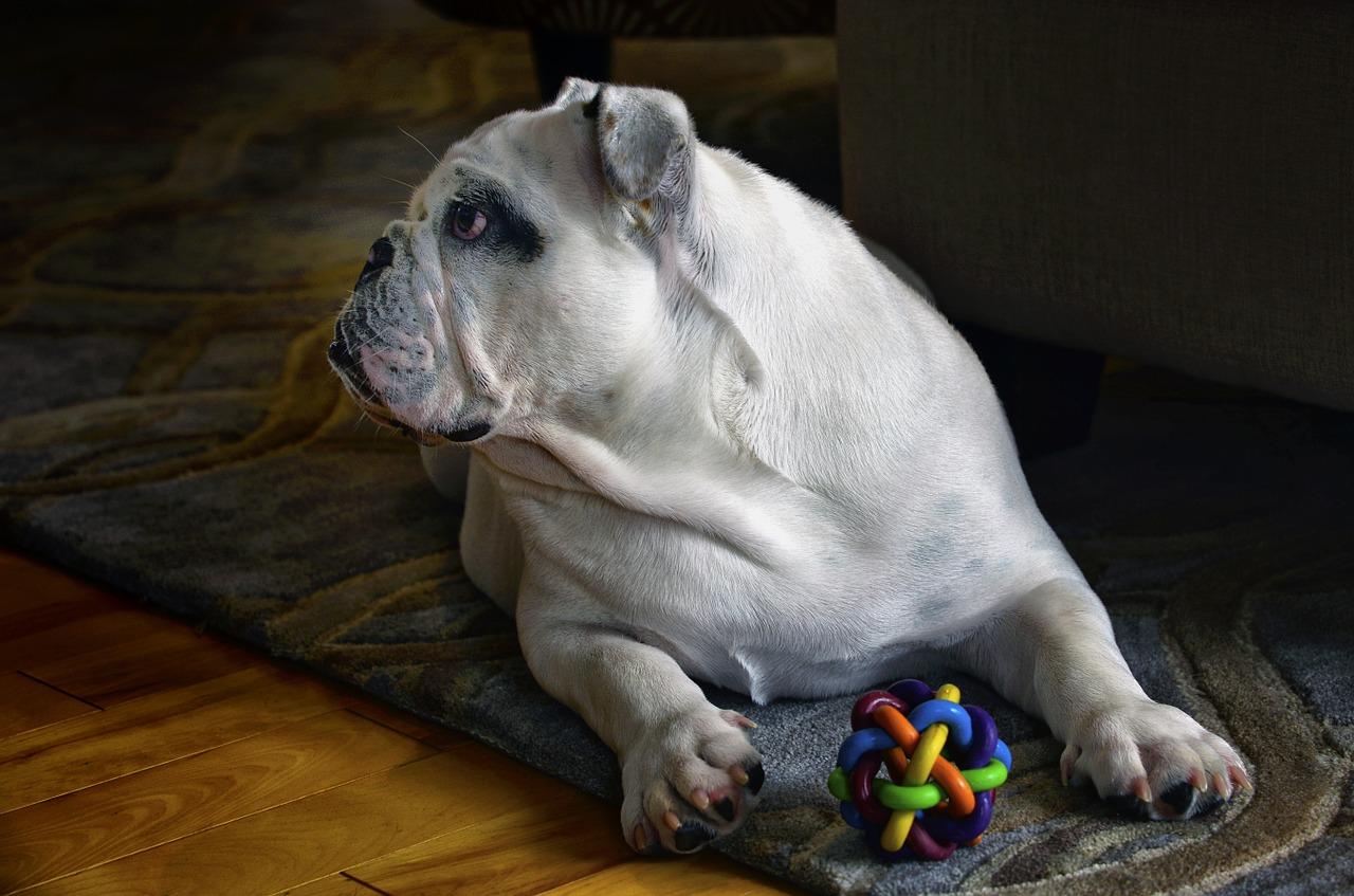 חנות חיות: כפר השעשועים של הכלבים
